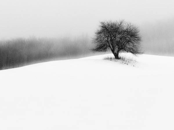 Photograph - Serenity by John Vose