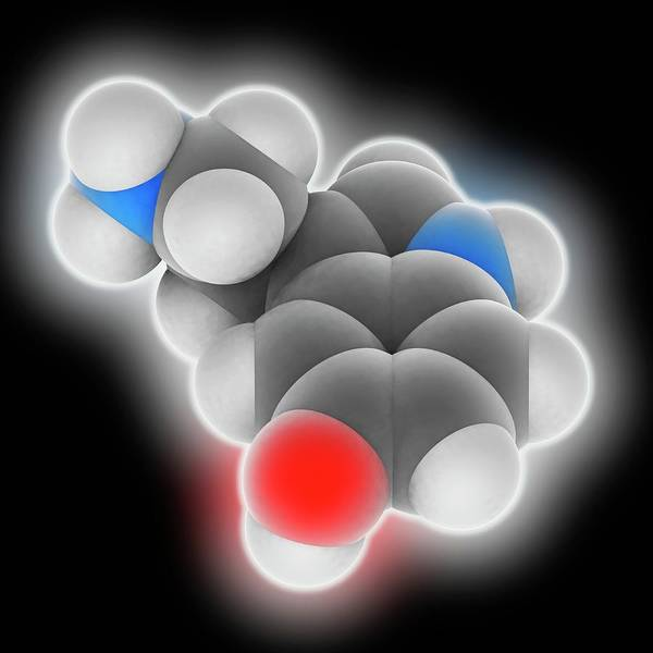 Neurotransmitter Wall Art - Photograph - Serotonin Molecule by Laguna Design