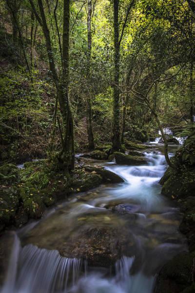 Photograph - Sesin Stream Near Caaveiro by Pablo Avanzini