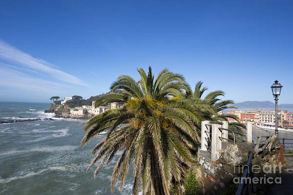 Sestri Levante Photograph - Sestri Levante And Palm Tree by Mats Silvan