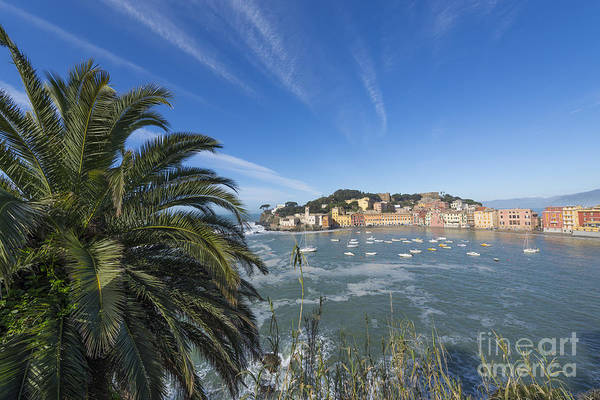 Sestri Levante Photograph - Sestri Levante With Palm Tree by Mats Silvan