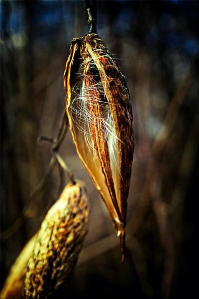 Photograph - Set Free by Beth Akerman