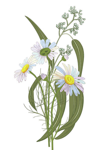 Vertical Line Digital Art - Set Of Chamomile Daisy Bouquets White by Olga Ivanova