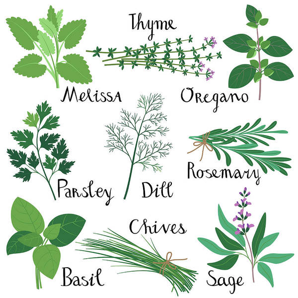 Vegetarian Digital Art - Set Of Fresh Herbs by Innabodrova