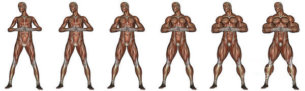 Muscle Tissue Digital Art - Set Of Six Men Showing Progression by Elena Duvernay