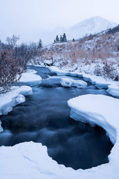 Photograph - Settling Into Winter by Tim Newton