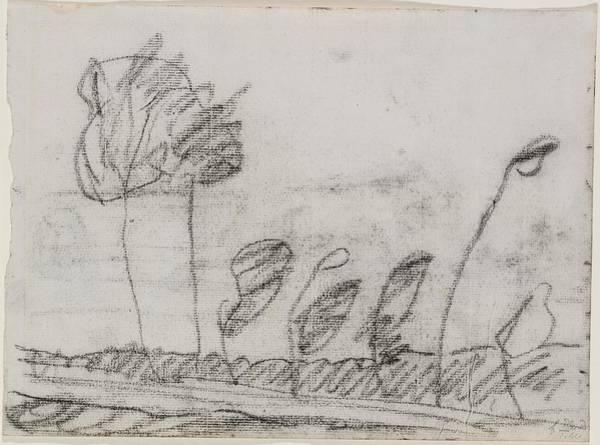 Paula Wall Art - Drawing - Seven Trees by Paula Modersohn-Becker