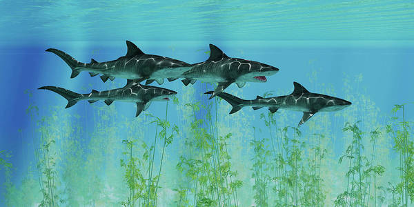 Wall Art - Photograph - Several Tiger Sharks Swim Together by Corey Ford