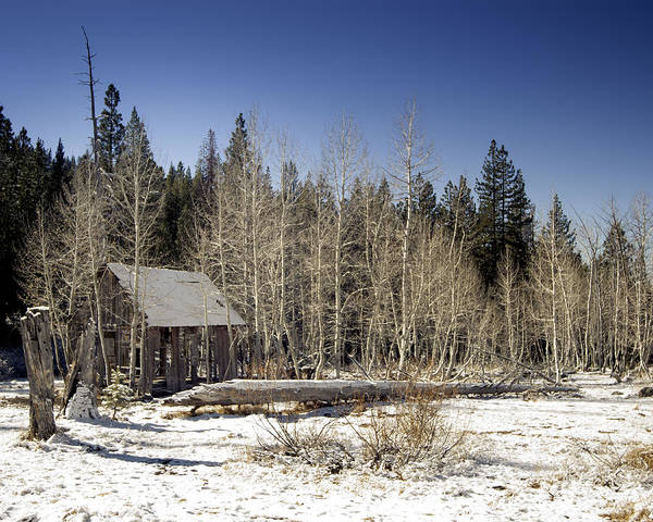 Photograph - Shack In The Aspens by William Havle