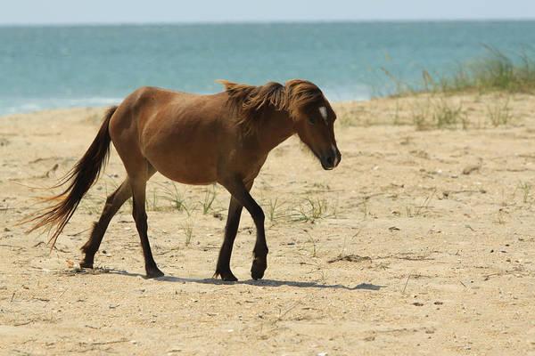 Bob Fisher Photograph - Shackelford Pony by Bob Fisher