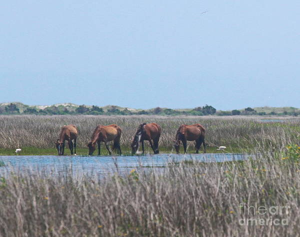 Harkers Island Photograph - Shackleford Horses And Friends 3 by Cathy Lindsey