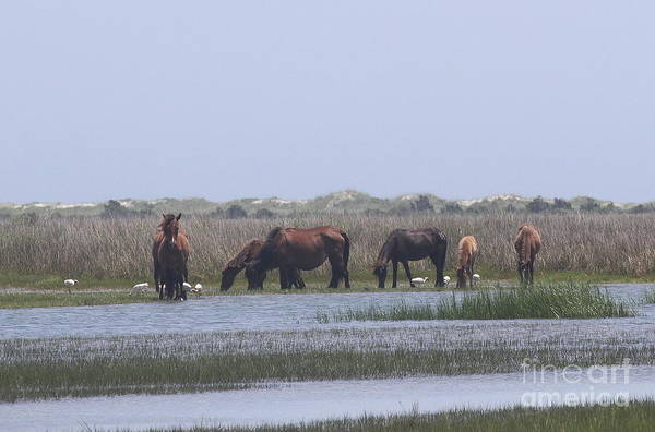 Harkers Island Photograph - Shackleford Horses And Friends 6 by Cathy Lindsey