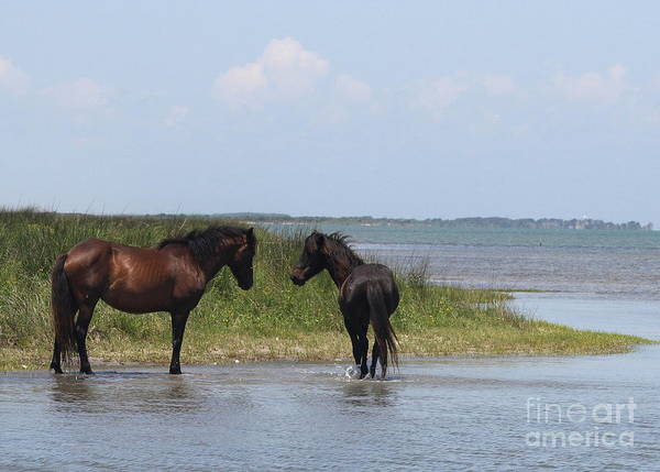 Harkers Island Photograph - Shackleford Ponies 5 by Cathy Lindsey