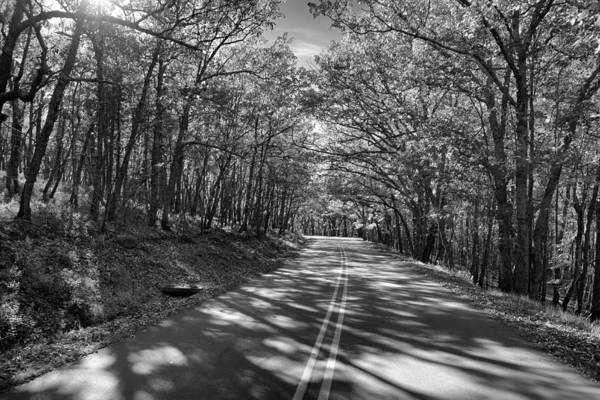 Photograph - Shaded Rd Bw by Patrick M Lynch