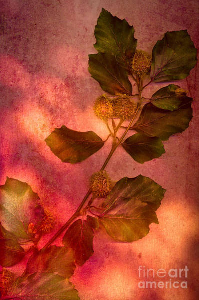 Wall Art - Photograph - Shades Of Autumn by Jan Bickerton