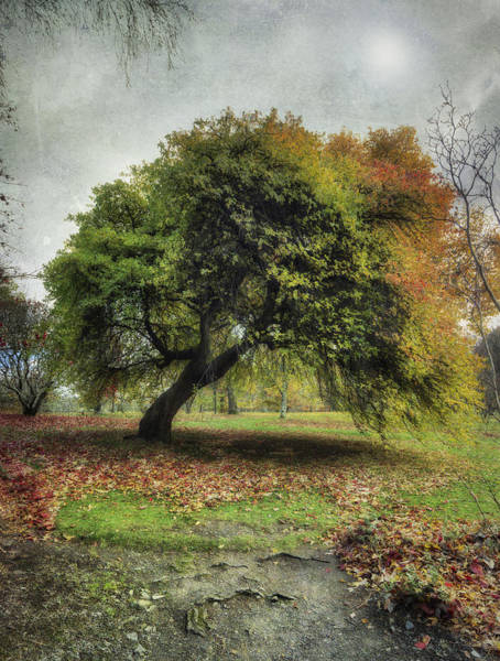 Photograph - Shades Of Autumn V2 by Ian Mitchell