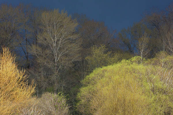 Ken Photograph - Shades Of Early Spring by Ken Archer