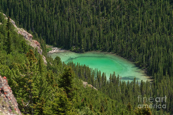 Photograph - Shades Of Green by Charles Kozierok