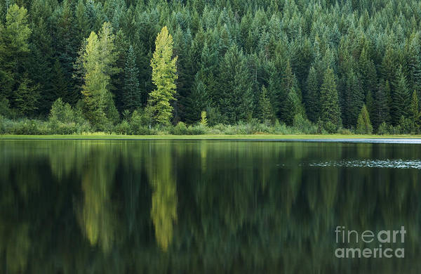 Photograph - Shades Of Green by Charmian Vistaunet