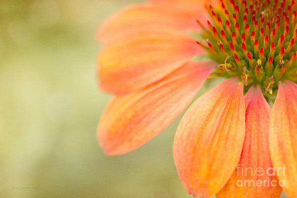 Photograph - Shades Of Summer by Beve Brown-Clark Photography