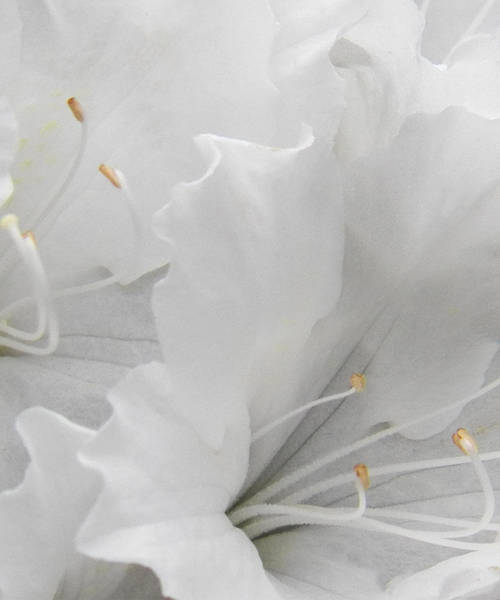 Photograph - Shades Of White by Steven Huszar