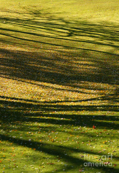 Photograph - Shadow Grass by Linda Shafer