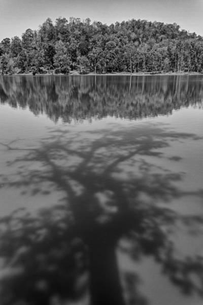 Photograph - Shadow On Lake, Nagzira, 2011 by Hitendra SINKAR