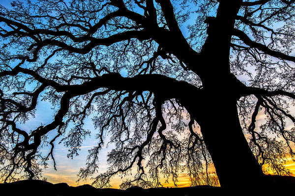 Sun Set Photograph - Shadow Play by Aron Kearney