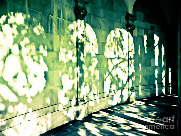 Wall Art - Photograph - Shadow Play by Colleen Kammerer