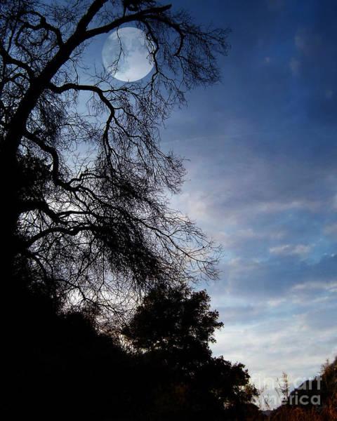 Digital Effect Photograph - Shadowlands 4 by Peter Awax