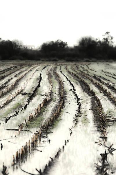 Photograph - Shadows by Edgar Laureano
