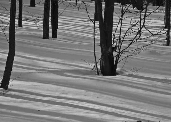 Mixed Media - Shadows In Boyertown Park by Trish Tritz