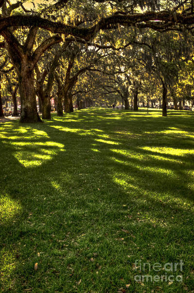 Photograph - Shadows Of Emmet Park Savannah by Reid Callaway