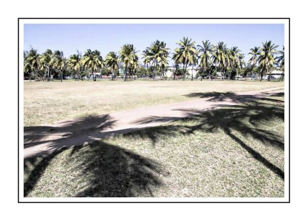 Photograph - Shadows Of Palms by Alice Gipson