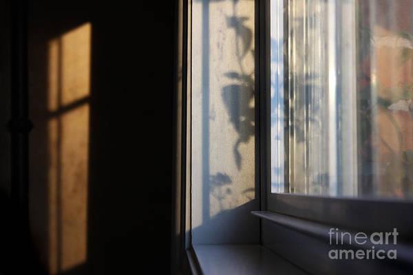 Photograph - Shadows Of The Sun by Karen Adams