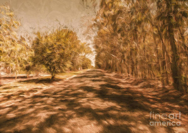Pastel Drawing Photograph - Shadows On Autumn Lane by Jorgo Photography - Wall Art Gallery
