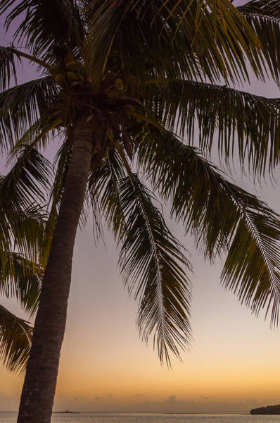 Photograph - Shady Palm by Kristopher Schoenleber