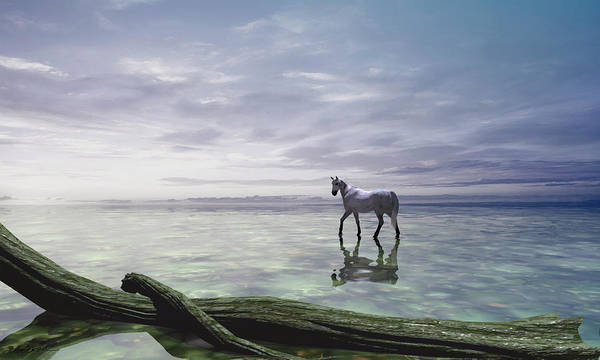 White Horse Digital Art - Shallows by Cynthia Decker