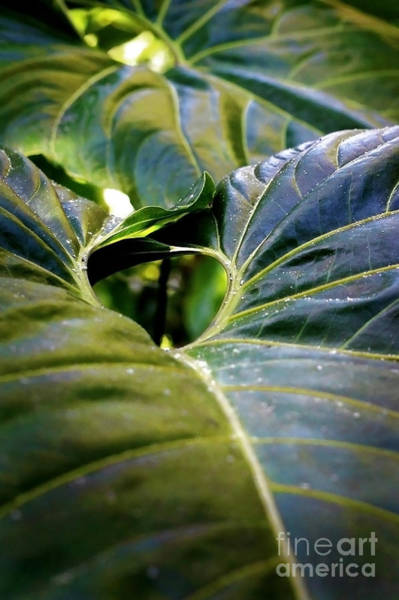Photograph - Shapes Of Hawaii 11 by Ellen Cotton