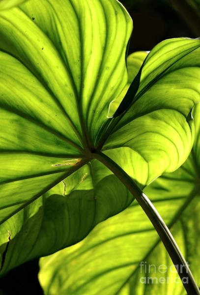 Photograph - Shapes Of Hawaii 12 by Ellen Cotton