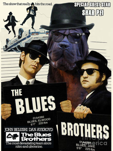 The Blues Brothers Painting - Shar Pei Art Canvas Print - The Blues Brothers Movie Poster by Sandra Sij