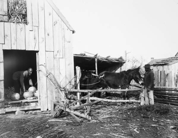 Photograph - Sharecroppers, 1899 by Granger