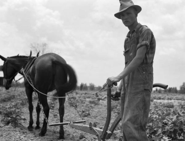Photograph - Sharecropper's Son, 1937 by Granger