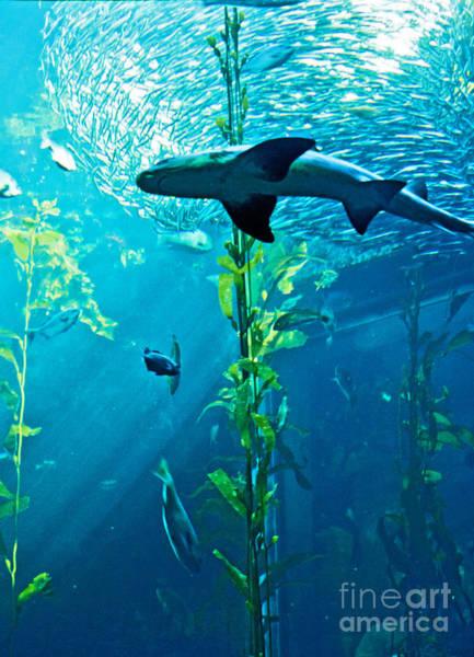 Fish Tank Photograph - Shark by Micah May