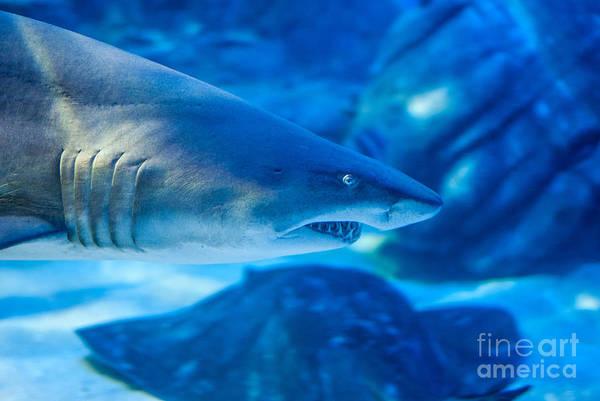 Photograph - Shark by Ray Warren