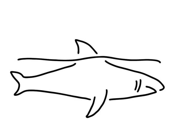 Shark Drawing - Shark Shark Fish Fin Sea by Lineamentum