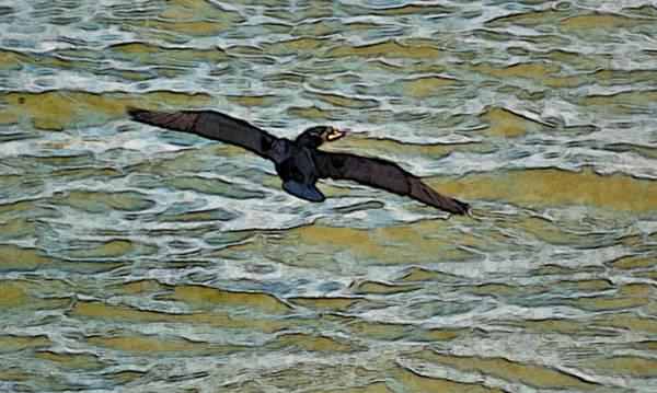 Photograph - Shawnee Lake Wild Duck 3 by G L Sarti