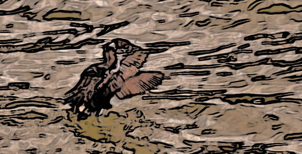 Photograph - Shawnee Lake Wild Duck by G L Sarti