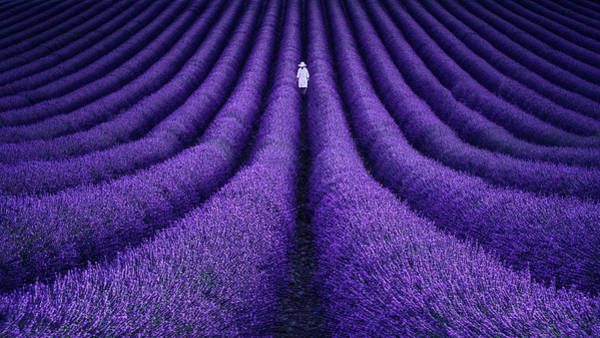 Lavender Wall Art - Photograph - She by Lluis De Haro