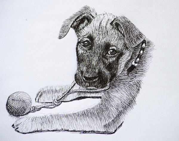 Drawing - Sheba by Wade Clark